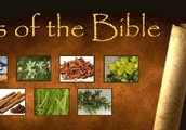 Oils of the Bible Class is Coming to Wilkes!