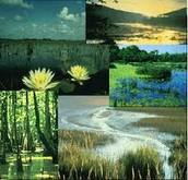 Wetland!