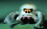 Los ojos de la araña