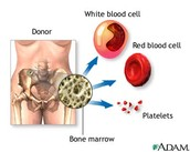 Different parts of blood in the bone marrow.