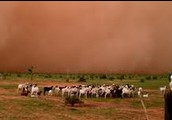Sandstorm In Sahel