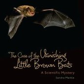 The Case of the Vanishing Little Brown Bats by