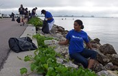 people volunteering for coastal pickup