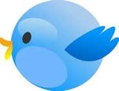 Follow Mrs. Cervone on Social Media
