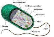 Estructura de las células procariotas: