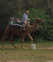 #2 ride a camel