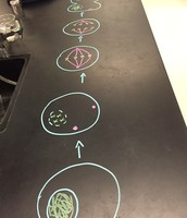 draw it out on the lab tables :)