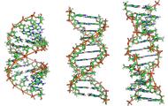 ДНК-Ген-Хромосом