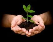 Planta arboles
