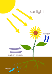 Photosynthesis-