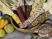 What did the Pueblos eat?