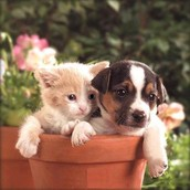 HAVE SOME OF OUT DELICIOUS CATS N DOGS
