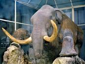 amazing mammoth