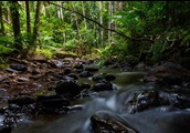A small river in the Daintree