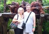 Breakfast with the Orangotangs- Singapore