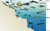 More Sea Animals