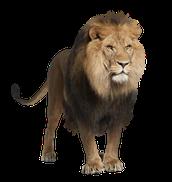Symbolism: Lion