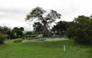 La Ceiba de Ponce