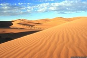 A place you should visit is the Sahara desert