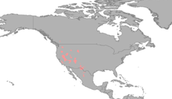 Desert Climate