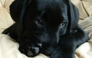 Snuggle Buddy?