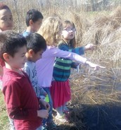 Searching for tadpoles