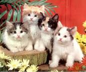 gatitos para familias tiernas