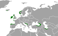 European Temperate Rainforests