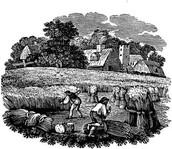 Colonial wheat farming
