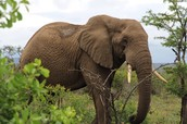 Another Safari Friend?