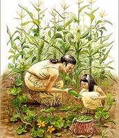 Harvested crops