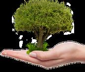 Help us Grow a POET-TREE