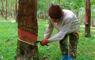 Rubber tappers
