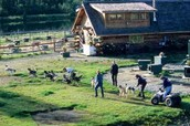 sled dog farm facility