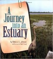 A Journey into an Estuary