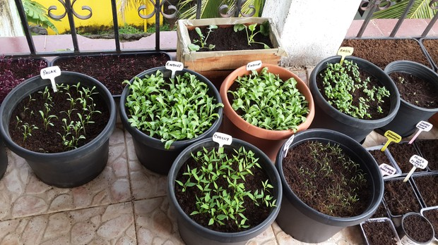 WORKSHOP: Grow Organic Monsoon Veggies In Pots