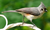 John James Audubon Center at Mill Grove