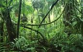 Rainforest habitat