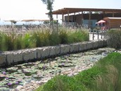 שיקום בדגש על צמחי תבלין וצמחי מים
