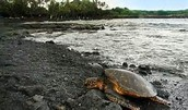 http://dguides.com/maui/attractions/beaches/south-maui-beaches/oneuli-black-sand-beach/