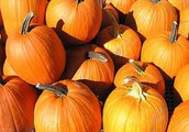 Nine Years of Supporting Our Community with Pumpkins
