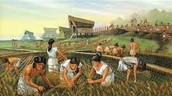 About the Agriculture
