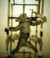 Did this monkey deserve to get stretched and poked at?