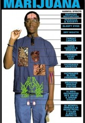 Affects of marijuana