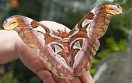 Scary Moth :(