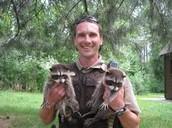 Hero of the Raccoon's