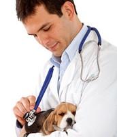 a vet helping a puppy