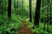 Bosque Caminar