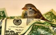 Nest of Bad Credit