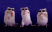 Three Blind Mice                                                                            by John W. Ivimey